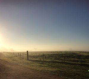 Sunrise over Pasture